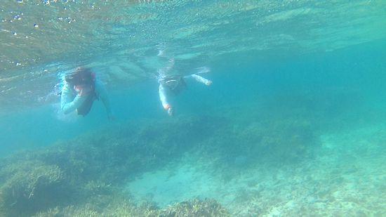 T村さんご姉妹は、無敵の泳ぎです