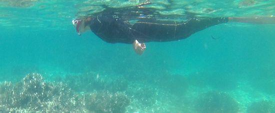 お母さんは、ダイバー!余裕の泳ぎです。