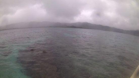 曇、小雨パラパラの一日です