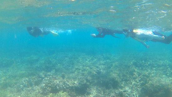 水中世界を楽しんでいらっしゃいます。