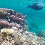 干潮時間は、サンゴがすぐ目の前です。