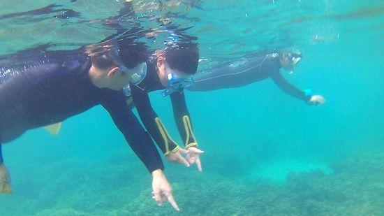 慣れれば、水中世界を満喫されています。