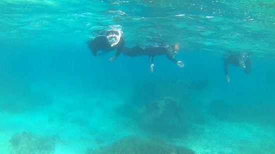 最初はまとまって泳いでいますが。。。
