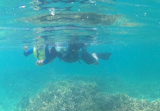 お父さんと一緒に泳いでいます
