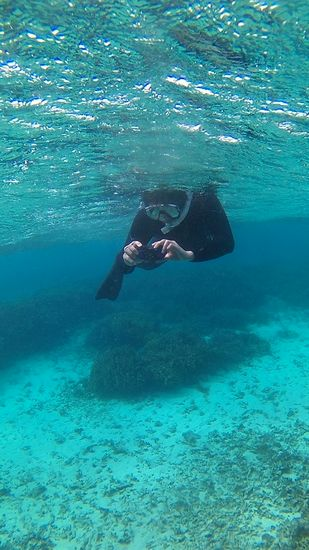 お父さんは水中カメラです