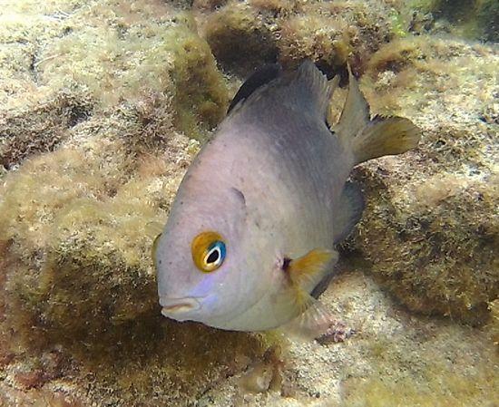 目が合うお魚さんです。