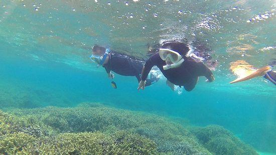 お父さんと、お母さんは慣れた泳ぎです。