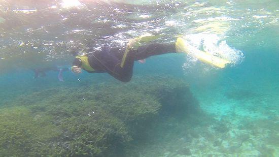 お姉さん、ガンガン泳ぎ回っています