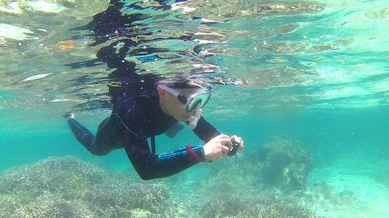 水中写真で撮影を楽しんでいます。