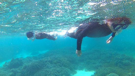 最後は一人で泳ぎ回っています