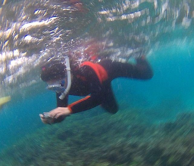 水中カメラでクマノミさんの撮影