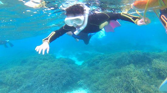 メイちゃん、顔をつけて泳いでいます