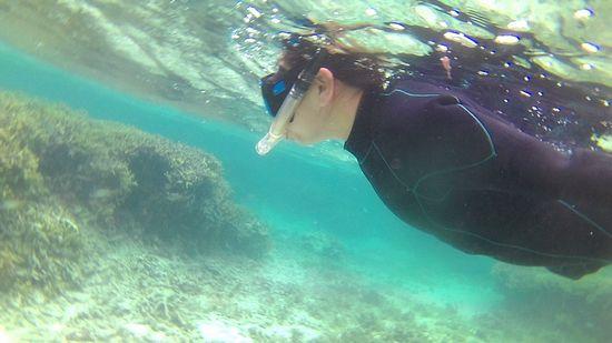 しっかり水中世界を楽しんでいらっしゃいます。