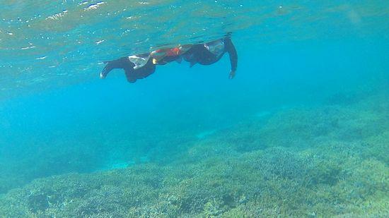 サンゴを楽しんでいます。
