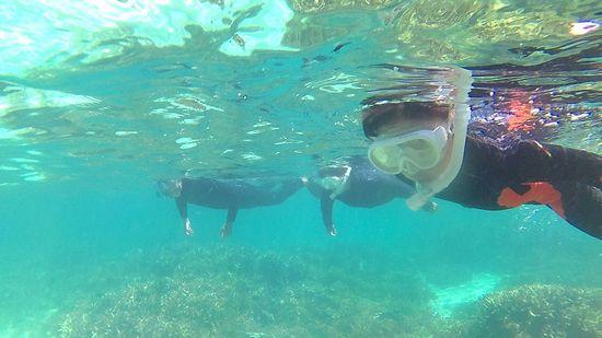 お魚さん観察を楽しでいます