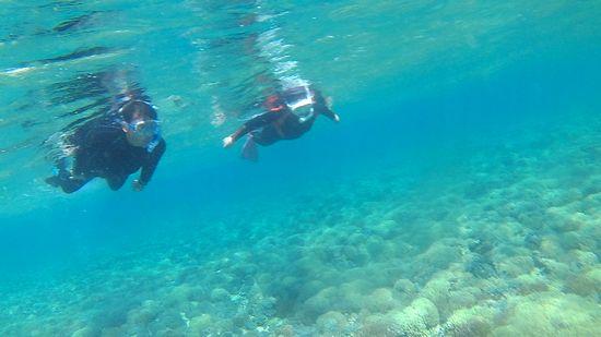 柔らかにフニフニサンゴを泳いでいきます。