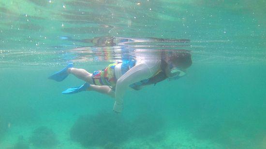 お父さんものんびり泳いでいます。