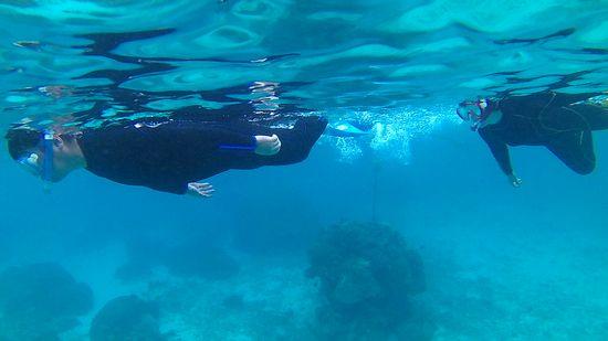 中盤からすいすい泳ぐS澤さんご夫婦です。