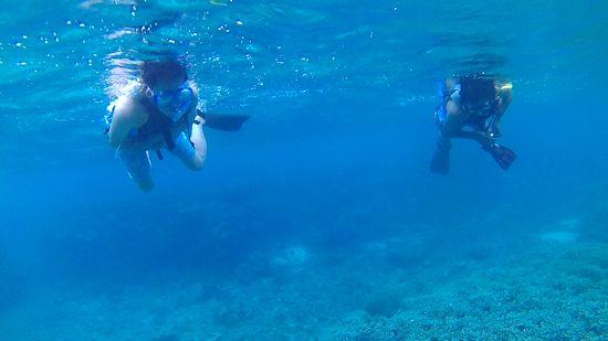透明度は抜群の海です