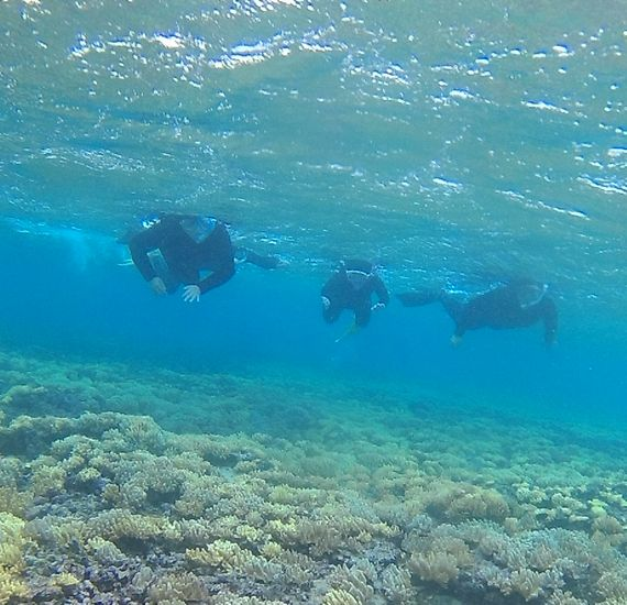 フニフニサンゴも楽しんで