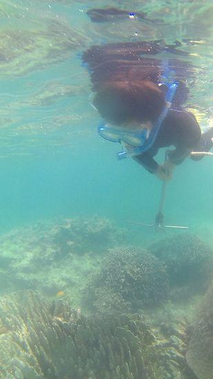 海人体験ツアーですね!