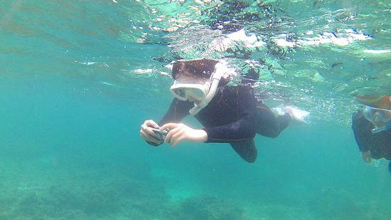 奥さんは活発な泳ぎです