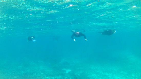 さぁすいすい泳ぎ始めていきます。