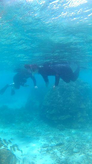 S村さんもゆったりのんびり泳ぎ回っています。