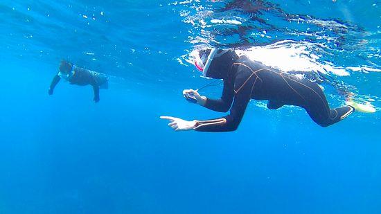 余裕の泳ぎで海を楽しんでいます。