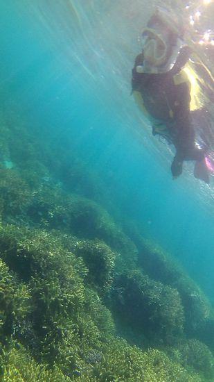 サンゴが増えてお魚さんいっぱいです