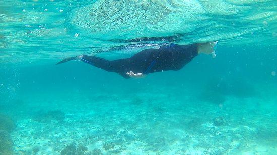 お母さんスイッチが入るとガンガン泳いでいます。