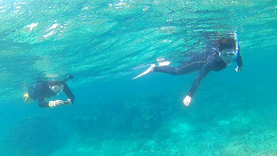 すぐにすーいすい泳ぎ初めています