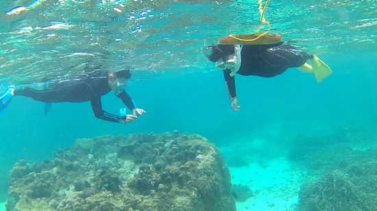 余裕の泳ぎで海を楽しんでいるお父さんとお母さんです。