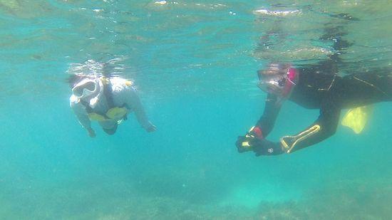 すぐにすいすい泳ぎ初めています