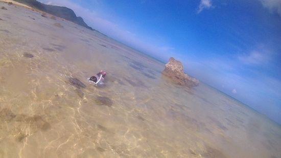 くるぶし位の水深ですが、必死で泳いでいます