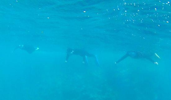 ベテランチームは、すーいすい泳ぎ回っています。