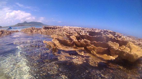 浅すぎてサンゴが干上がっています