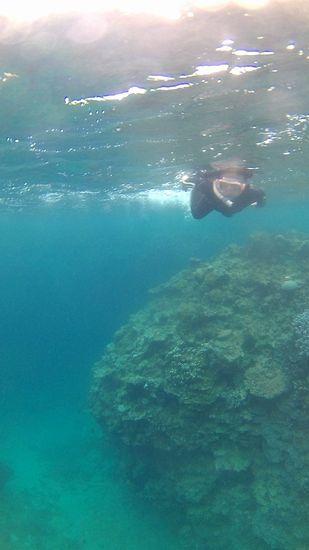深場もすいすい泳いでいます。
