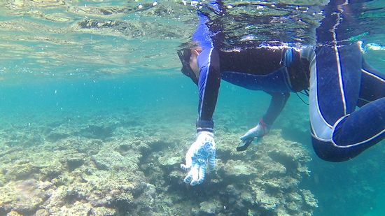 M江さんは、水中カメラで撮影を楽しんでいます。