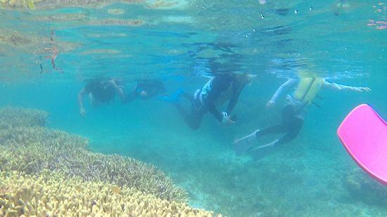 浅場のサンゴを泳いで