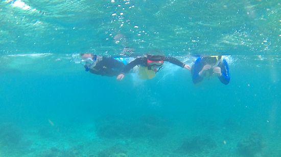 すぐに皆さんすーいすい泳ぎ初めていきます。