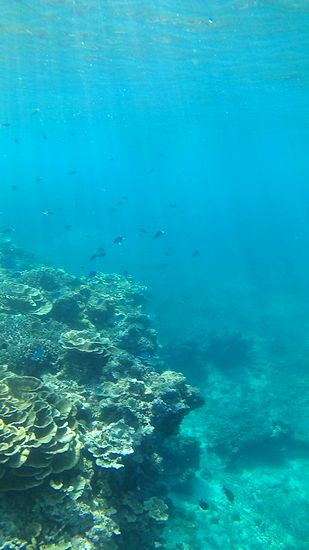 透明度抜群の海でしたっ!