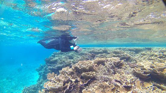 サンゴはこんなすぐ近くです