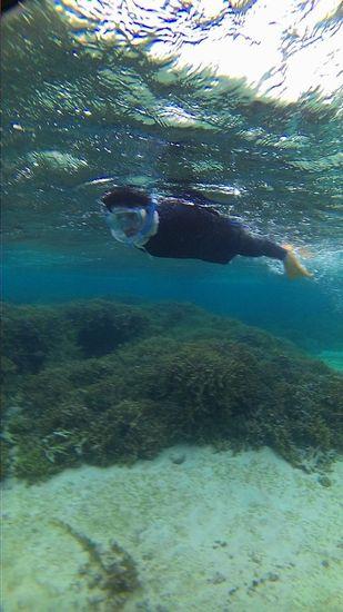 サンゴを満喫のお父さんです。