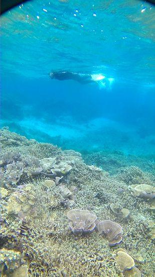 サンゴをゆったり楽しんで、進んでいきます