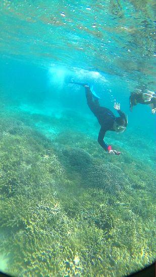 サンゴが増え始めると、素潜りドボンです
