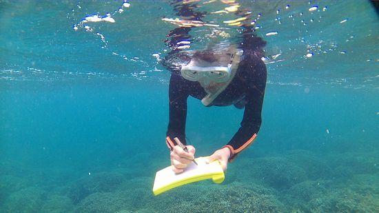 今日も水中ノートの出番です。
