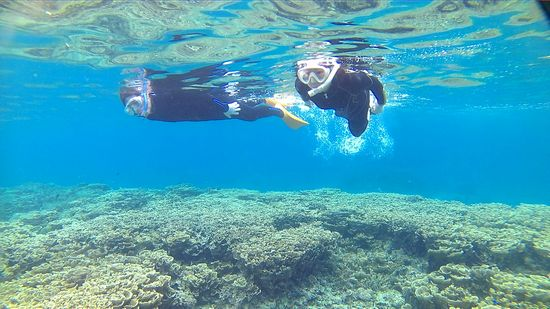 サンゴがびっちり広がります。
