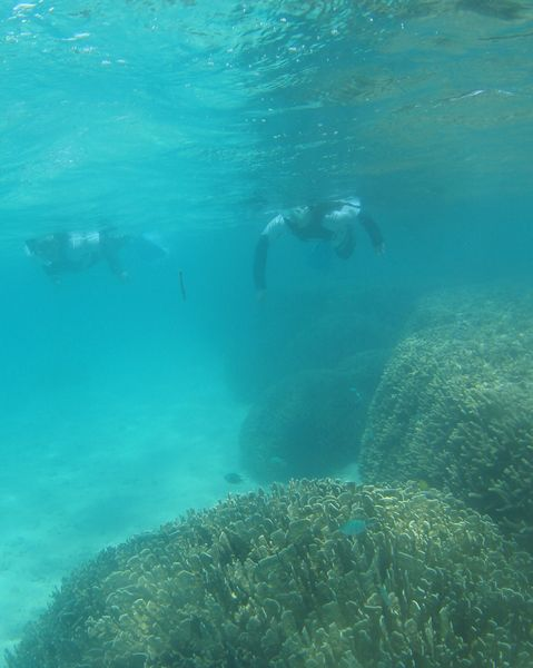 アオサンゴの上をシュノーケリング