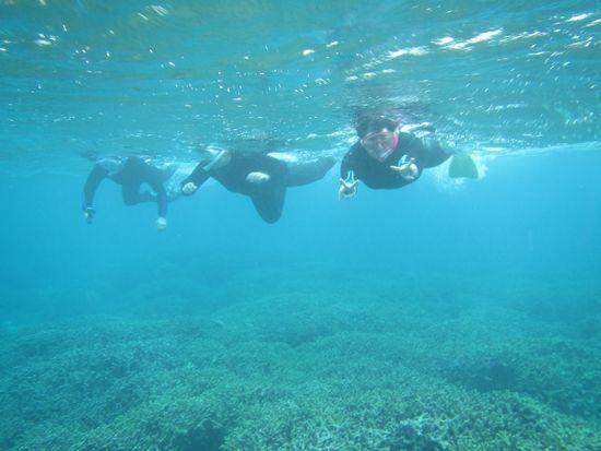 三人そろって、サンゴの上を泳いでいます